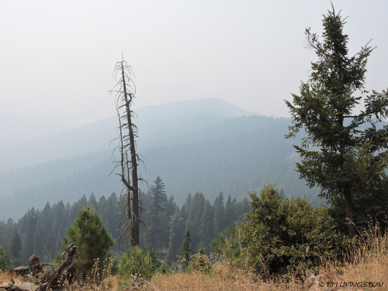 snag, forestry, wildfire