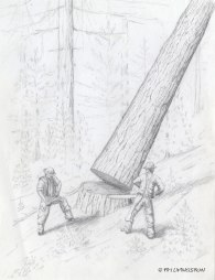 drawing, pencil,children's book, illustration, forestry