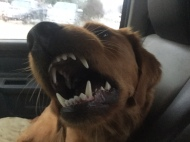 """Bliss: """"Rarr Rarr Ruff!!!"""" Me: """"Everyone's a critic. Maybe next time I'll let the sleeping dog lie."""""""