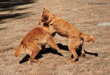 Bliss loves to play and Tasha isn't immune.