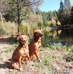 Bliss and Tasha in the Sierra.