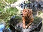 Bliss at Dog Creek.