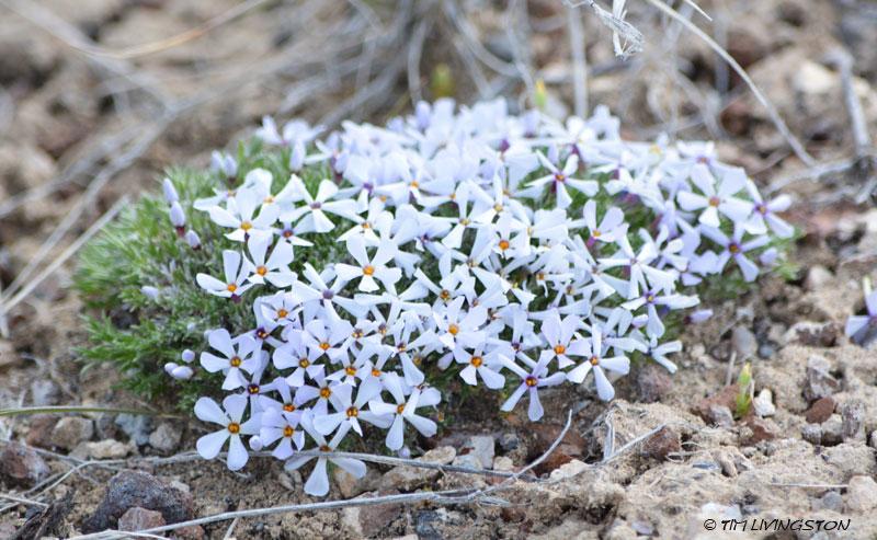 wildflowers, agate