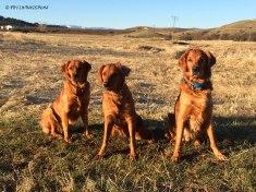 Bliss, Tasha and Sailor in Montana.