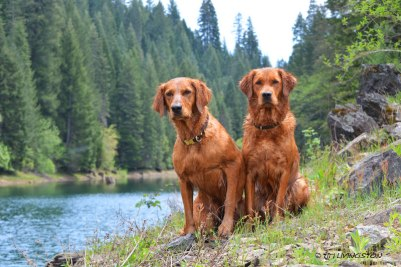 Tasha and Bliss at Sly Park Reservoir.