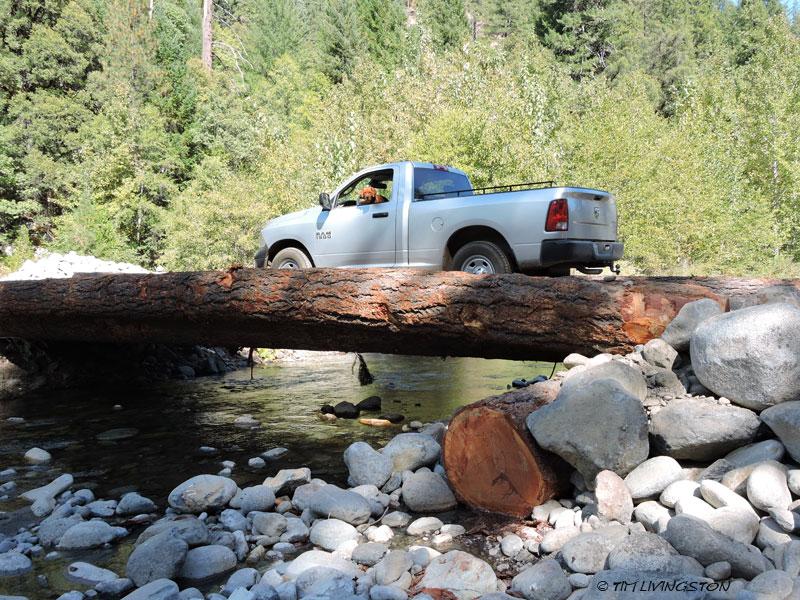 forestry, logging, bridge, log bridge, log stringer bridge