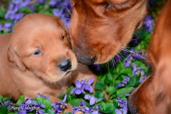 Bliss and Phanny photobombed a puppy photo shoot.