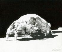 drawing, bear skull, black bear, pen and ink, pen drawing, wildlife