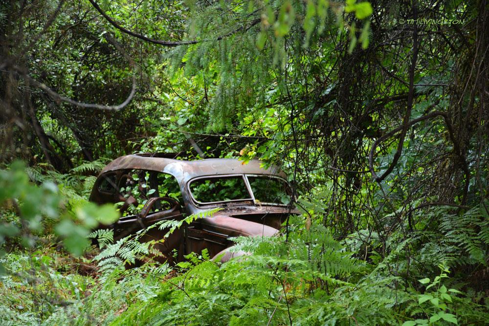 gangster, getaway car, abandoned car, woods