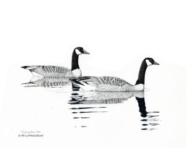 geese, Canada geese, pen and ink, drawing
