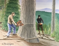 Timber fellers, c. 1940, felling old-growth Doug-fir with a two-man Diston chainsaw.