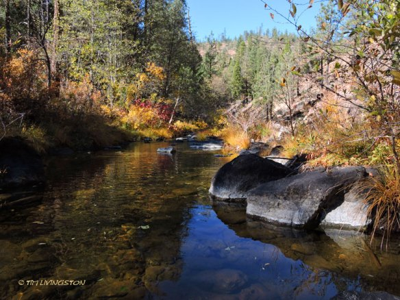 Hayfork Creek, fall color, gold