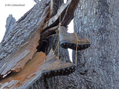 calk boots