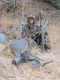 black-tailed deer, buck