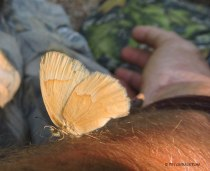 Butterflies would land on us while we sat in our blind. They were drinking sweat from our skin.