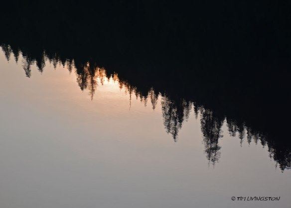 reflection, forest, sun, smoke