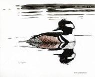 hooded merganser, merganser, waterfowl, birds, birding, pen and ink, drawing, wildlife, wildlife art