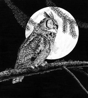 Owl001