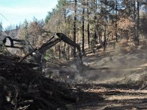 Carr Fire, wildfire, timber, salvage logging, forest, forestry, logging