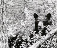 black bear, bear