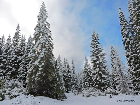 Snow, winter, forestry