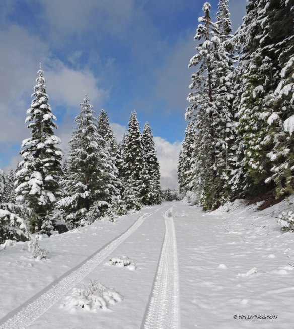 Winter, snow, snowy, forest, forestry, working forest