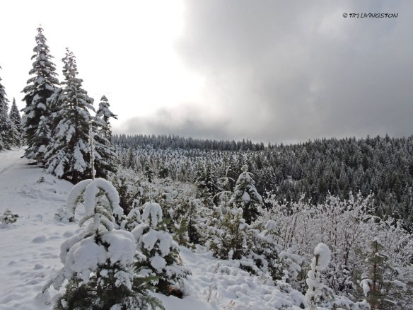 Snow, winter, forestry, working forest